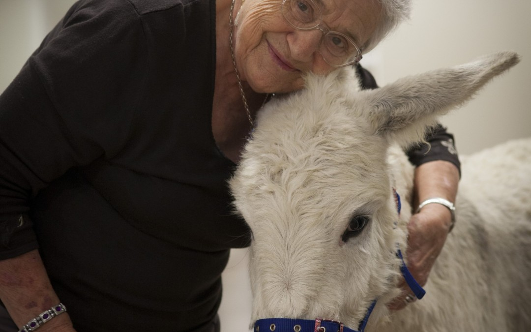 Animal therapy at Aurrum Healesville